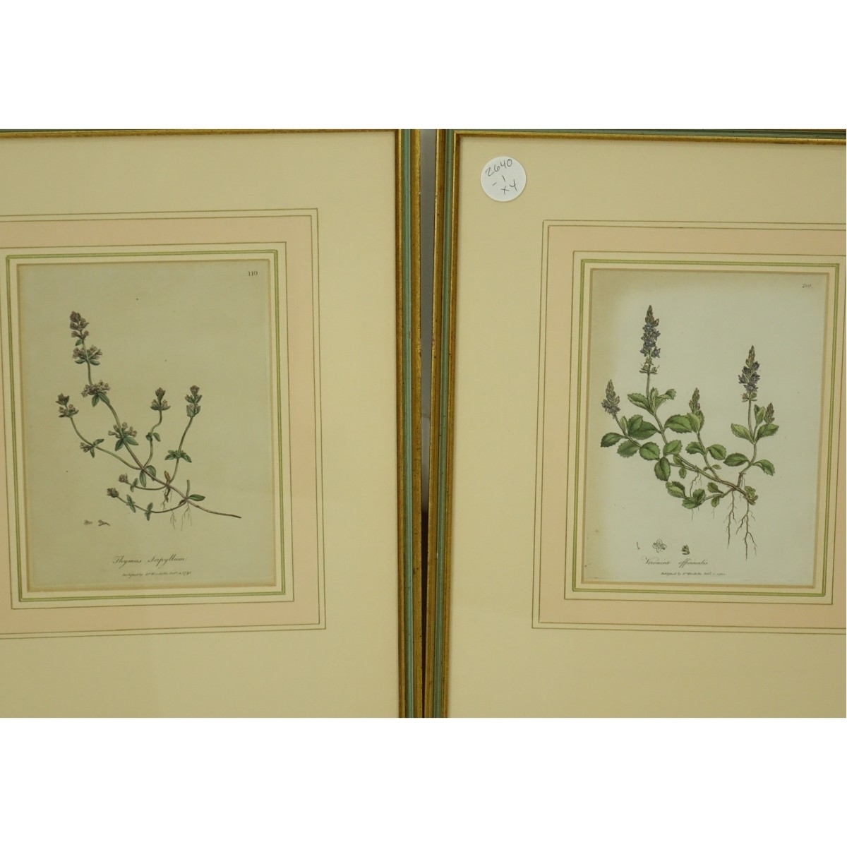 Alfred Adlard and Dr Woodville Botanical Prints
